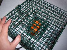 how to set a crab trap